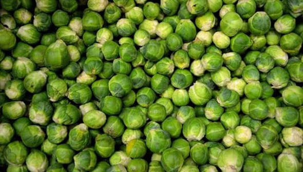 brussels-sprouts-sprouts-cabbage-grocery-41171